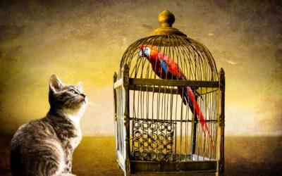 #69 | Il confronto che paralizza: come rialzare la testa e annientare il senso di inferiorità