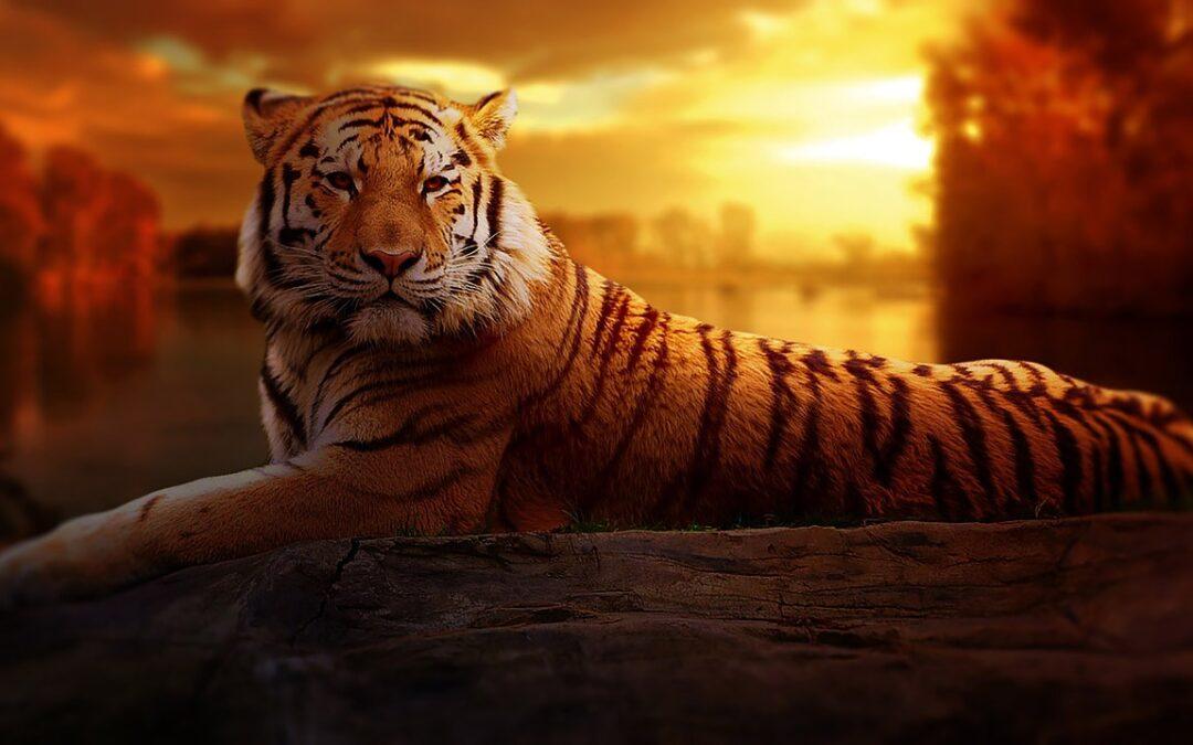 #66 | Come gestire la rabbia diventando abili domatori di tigri